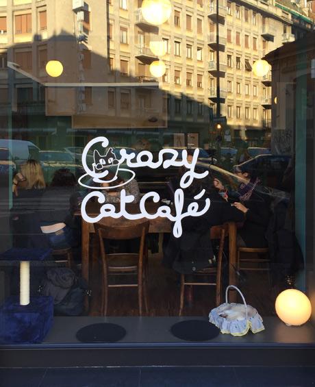 crazi_cat_1